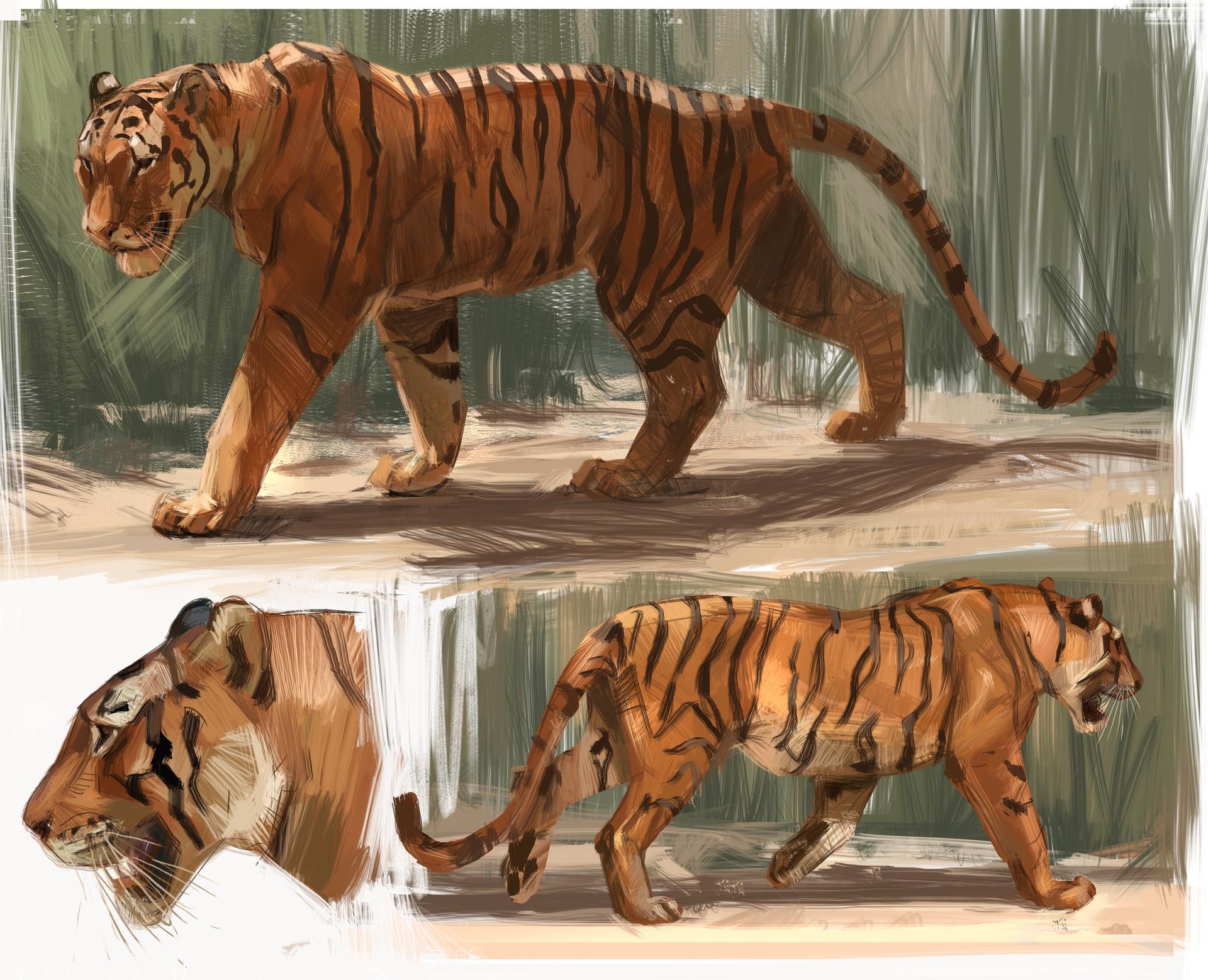 Jon kuo tiger study