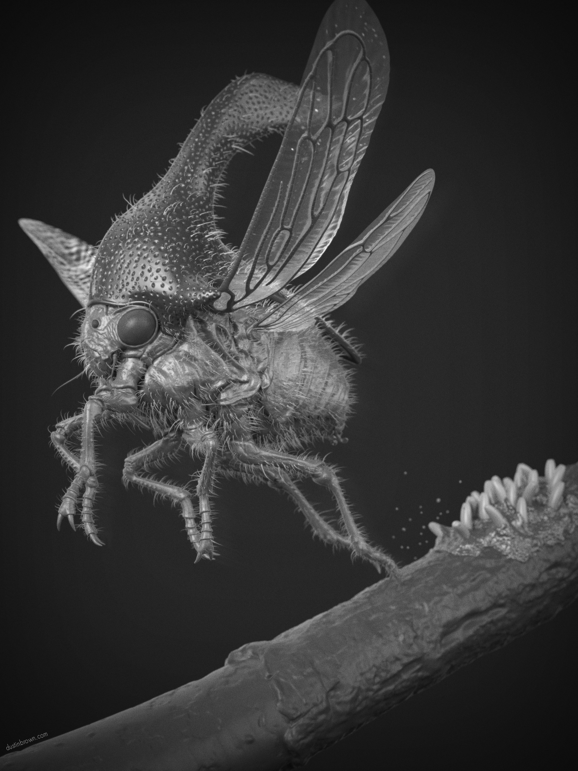 Dustin brown treehopper final