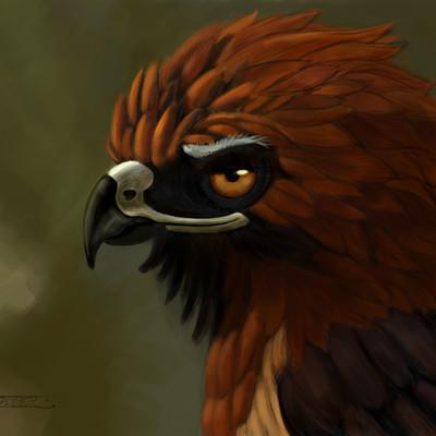 Nicholas jasper bruno roed tailed hawk