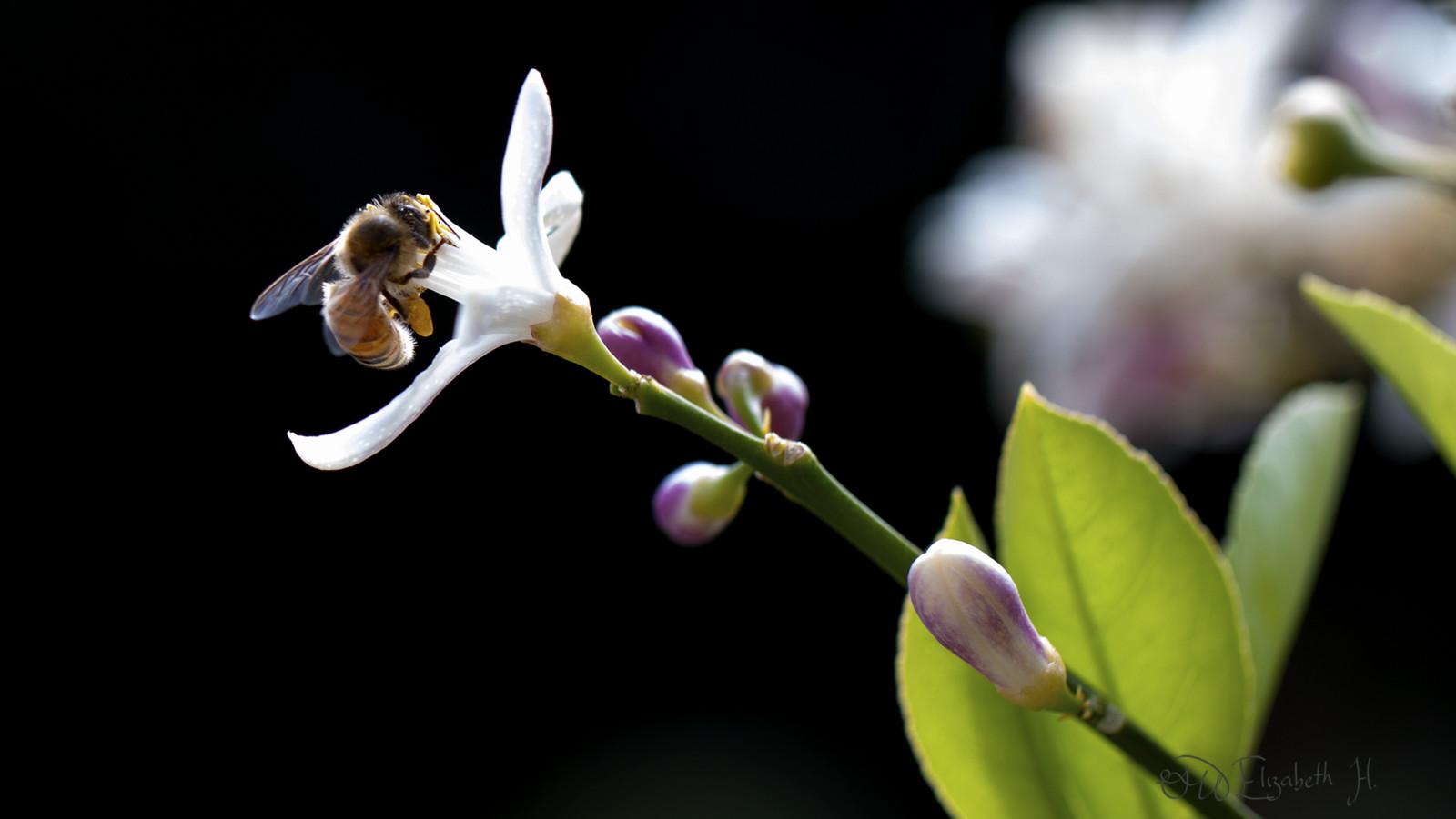 Little Bee (photography)