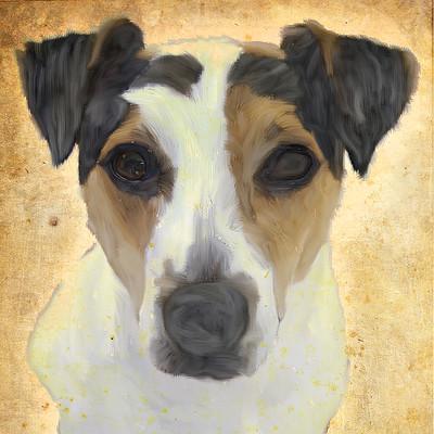 Michal czarnecki dog 2