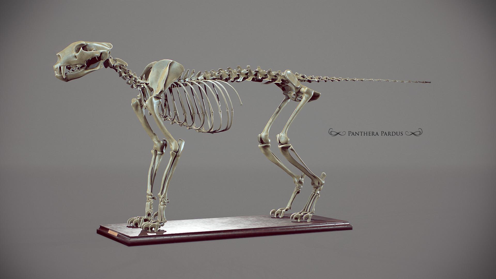 Florian croquet panthera