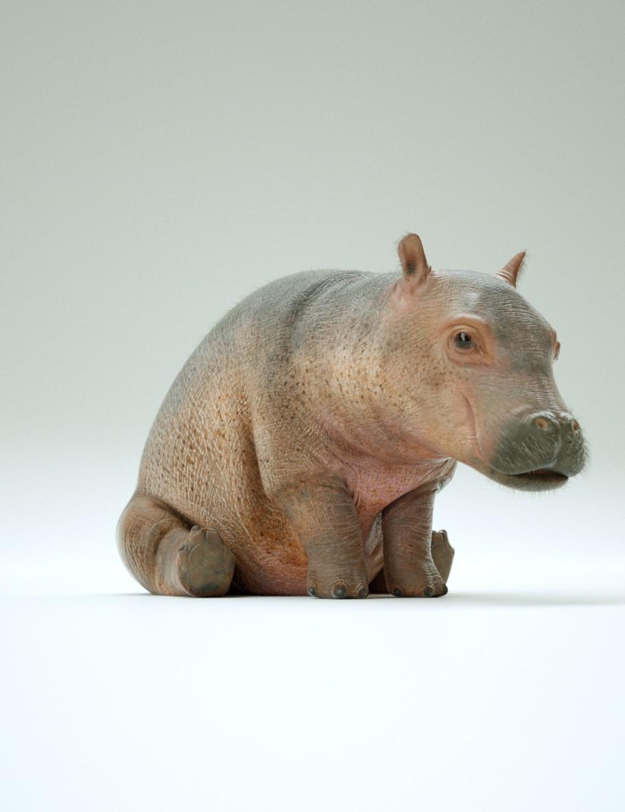 Paul massey hippo a 04
