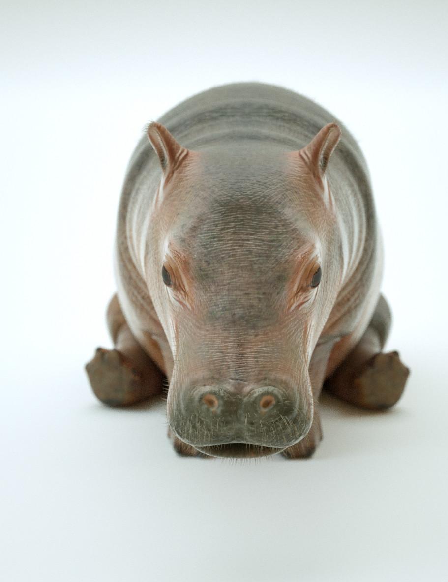 Paul massey hippo a 05