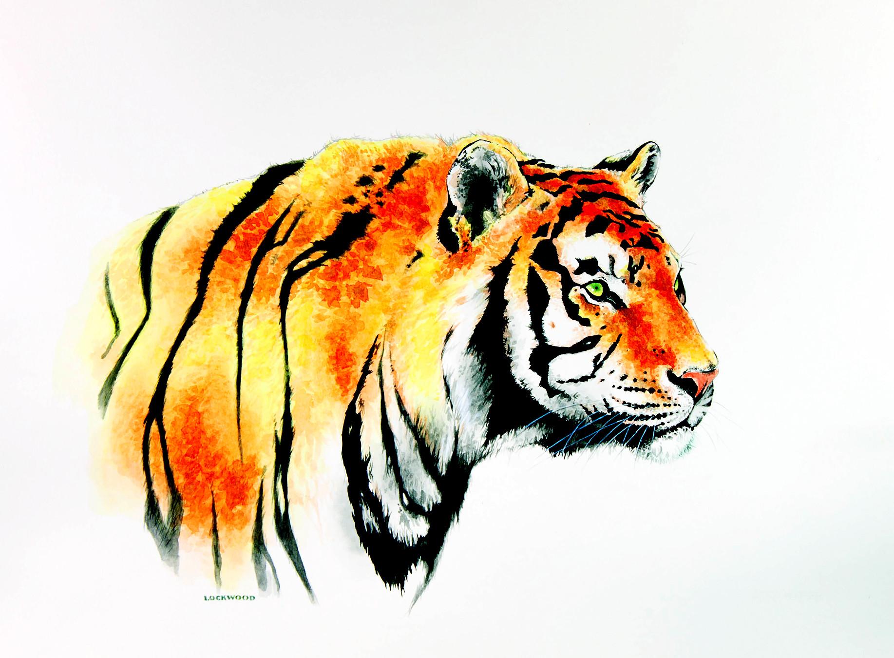 "Tiger 1 20x30"""
