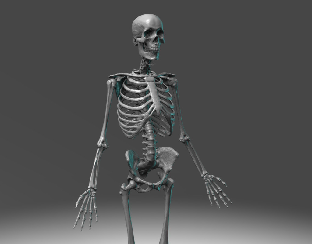 Madeleine spencer skeleton 6