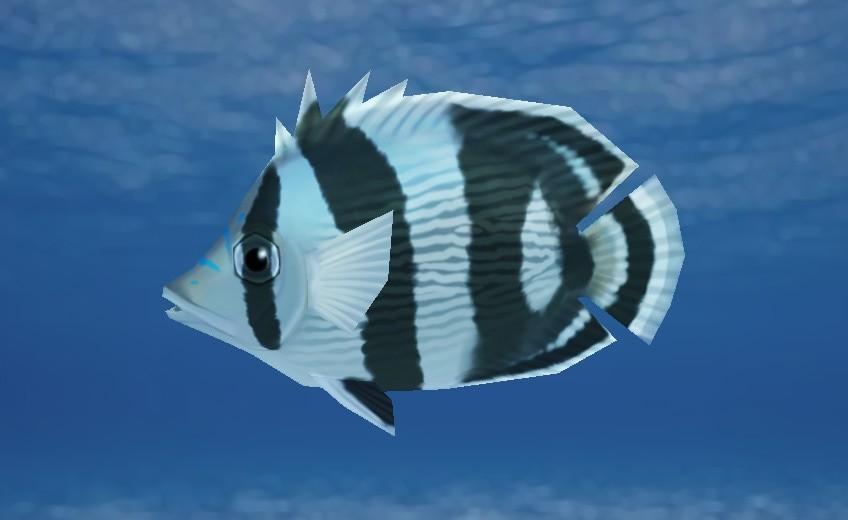 Cordelia wolf butterflyfish bg orig