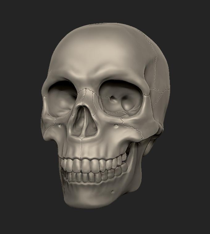 Cordelia wolf skull sculpt