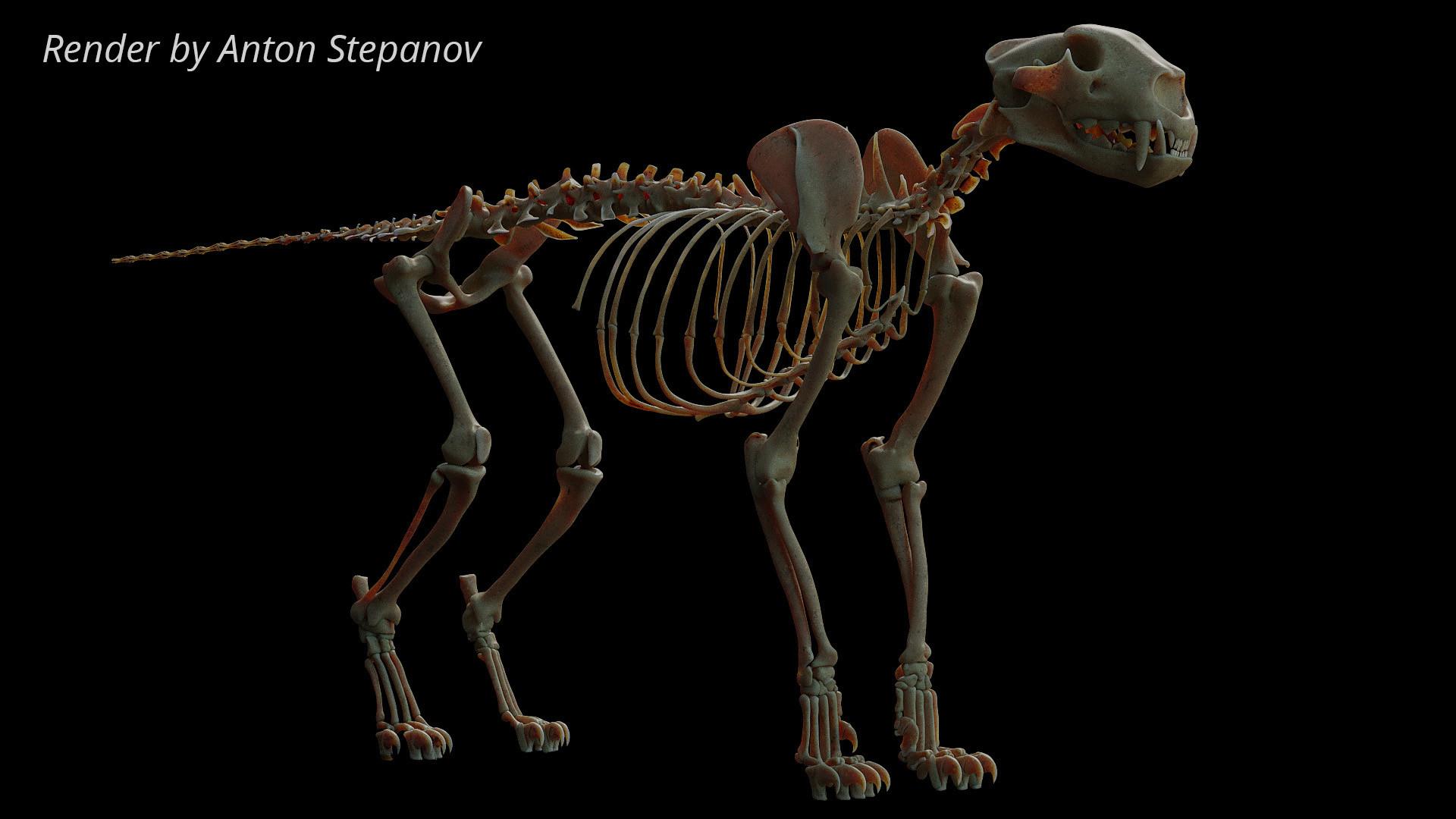 Florian croquet leopardgumrox