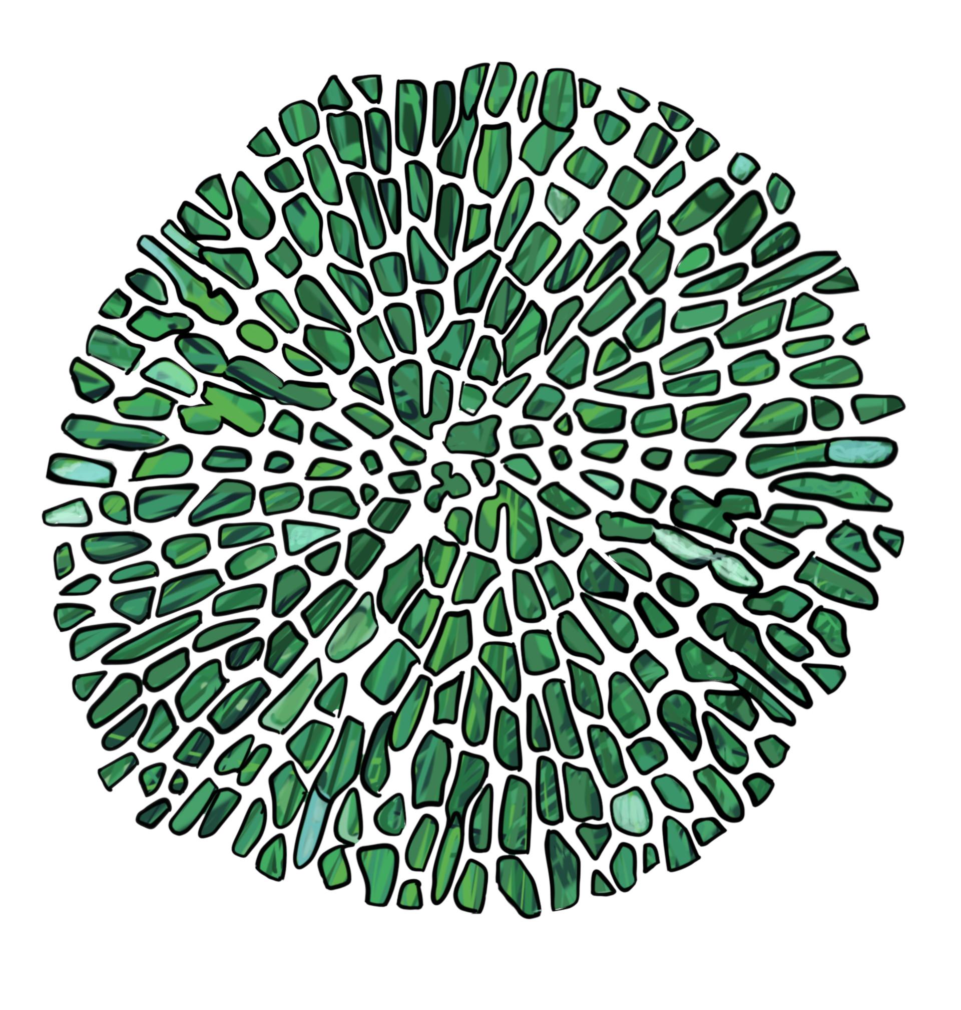 Caroline fangel 1705 avanceret alge 1707