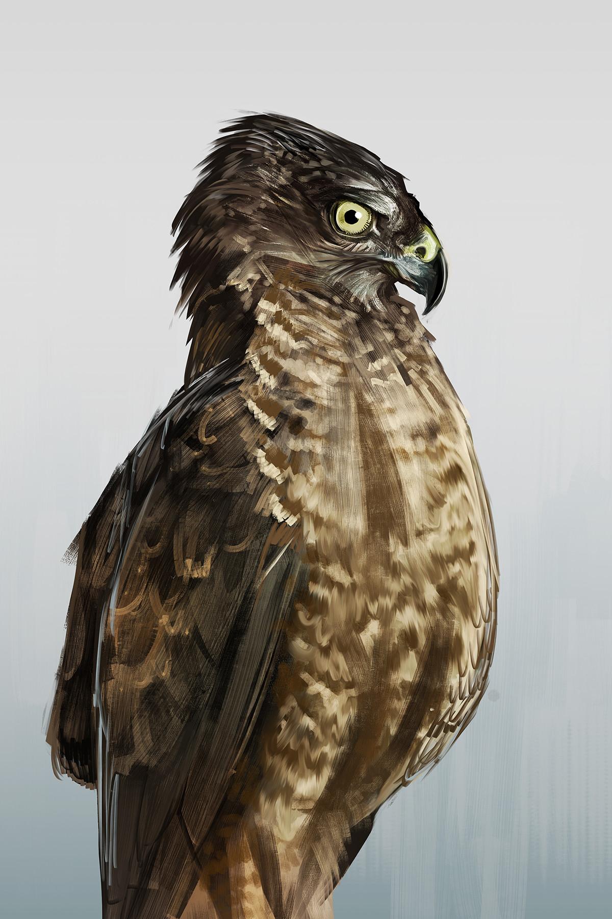 http://mymodernmet.com/leila-jeffreys-colorful-bird-portraits-pigeons-doves/