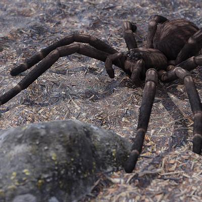 Zdenek elefant pavouk17p