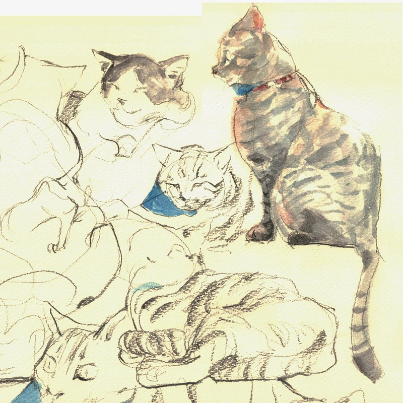 Some Cats.