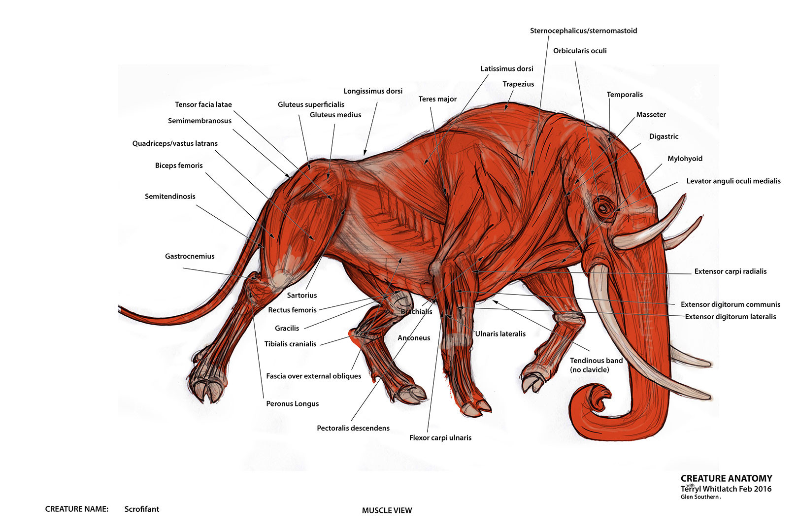 ArtStation - Creature Anatomy, Glen Southern