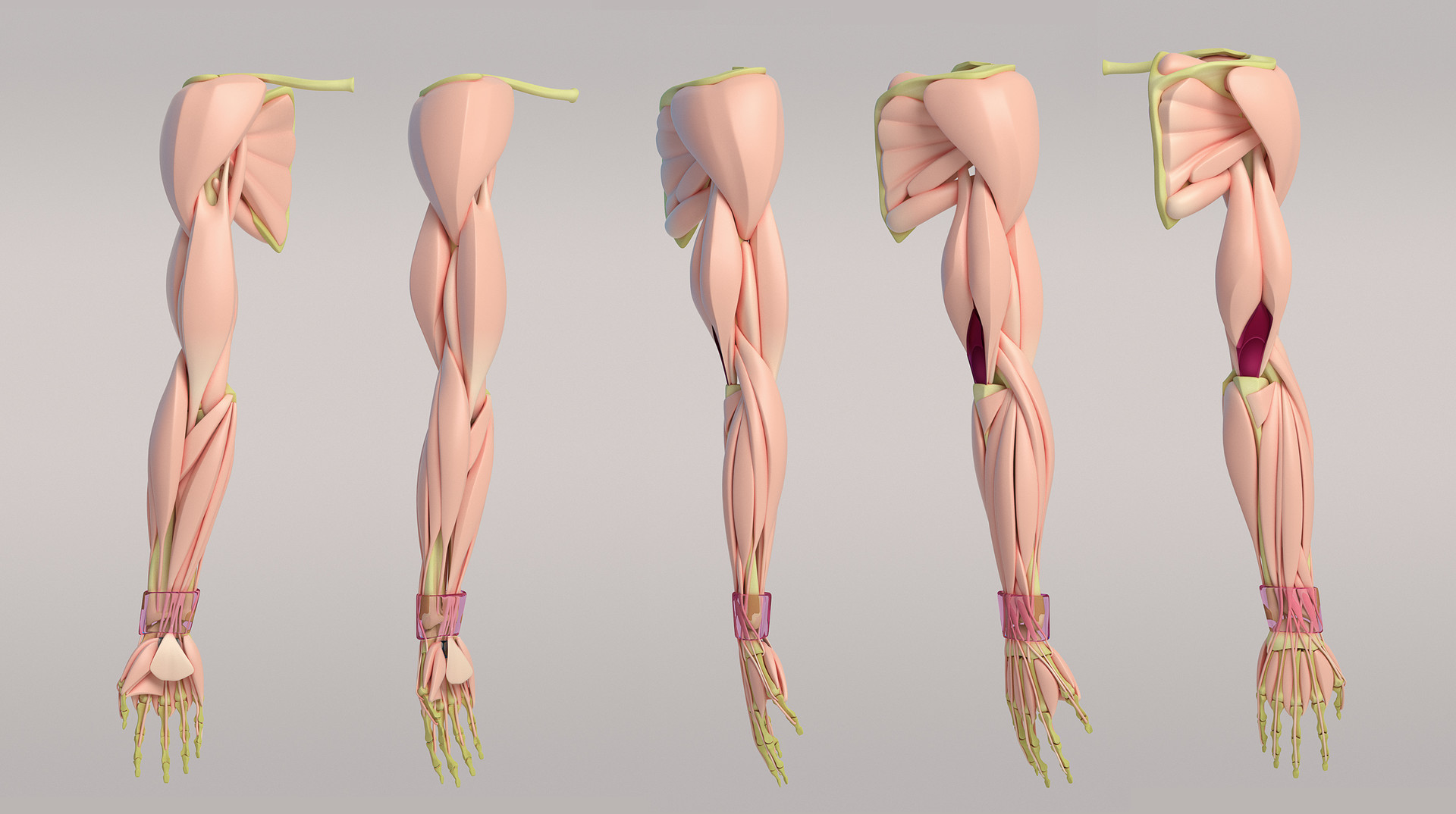 Artstation Arm Anatomy Aleksandrs K