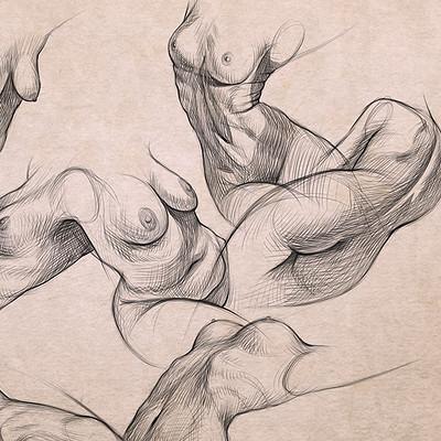 Joyceline furniss torso studies