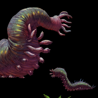 Peter sakievich fauna worm01 lifecycle