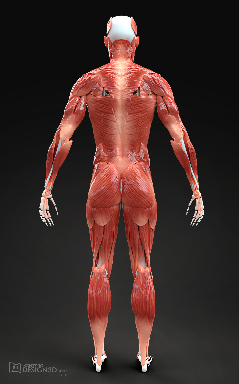 Alisson monteiro musculatura masc back