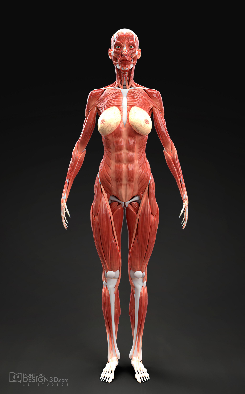 Alisson monteiro musculatura fem front