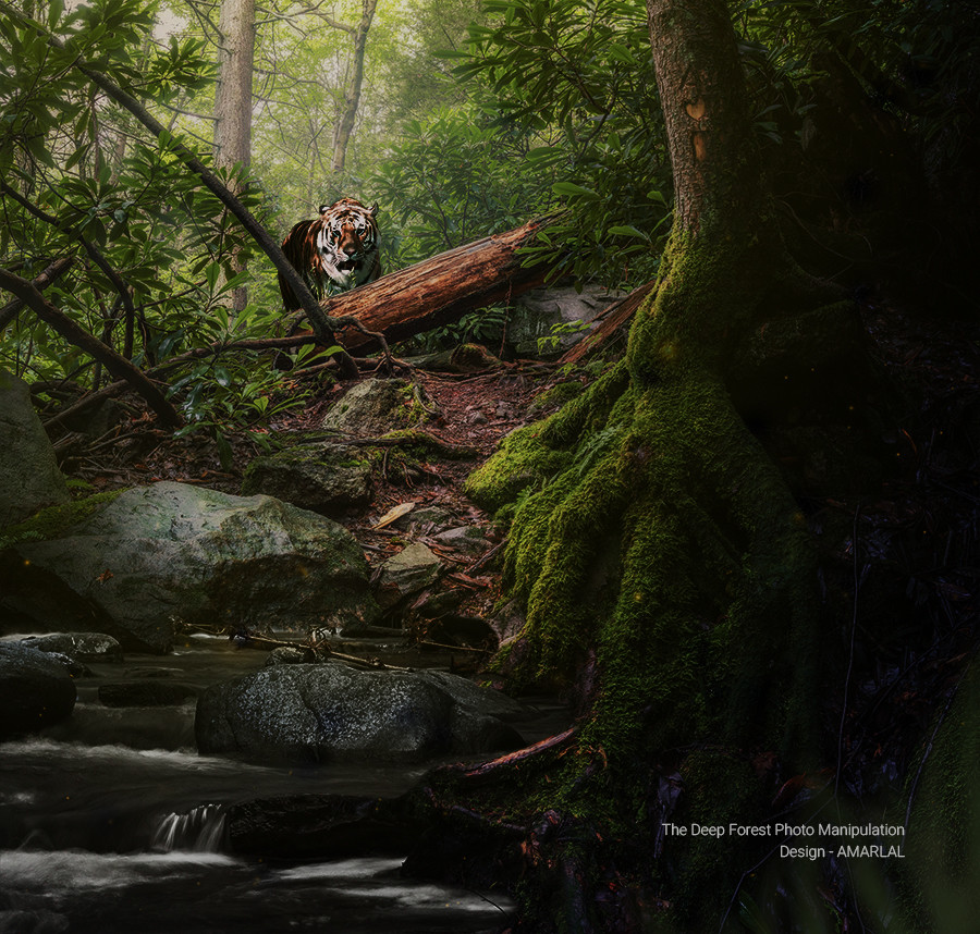 Tiger in Deep Forest - Photo Manipulation