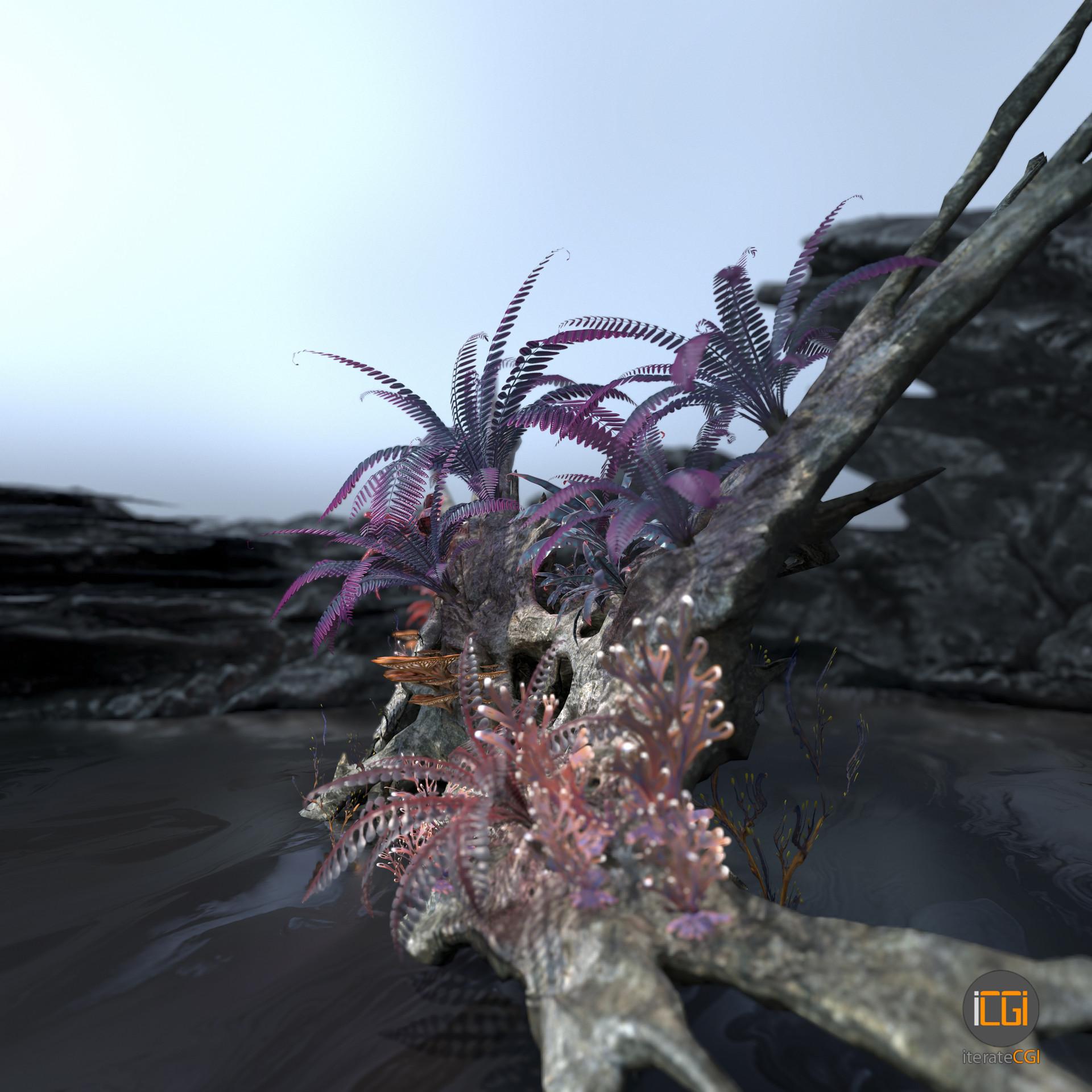 Johan de leenheer alien plant collection4
