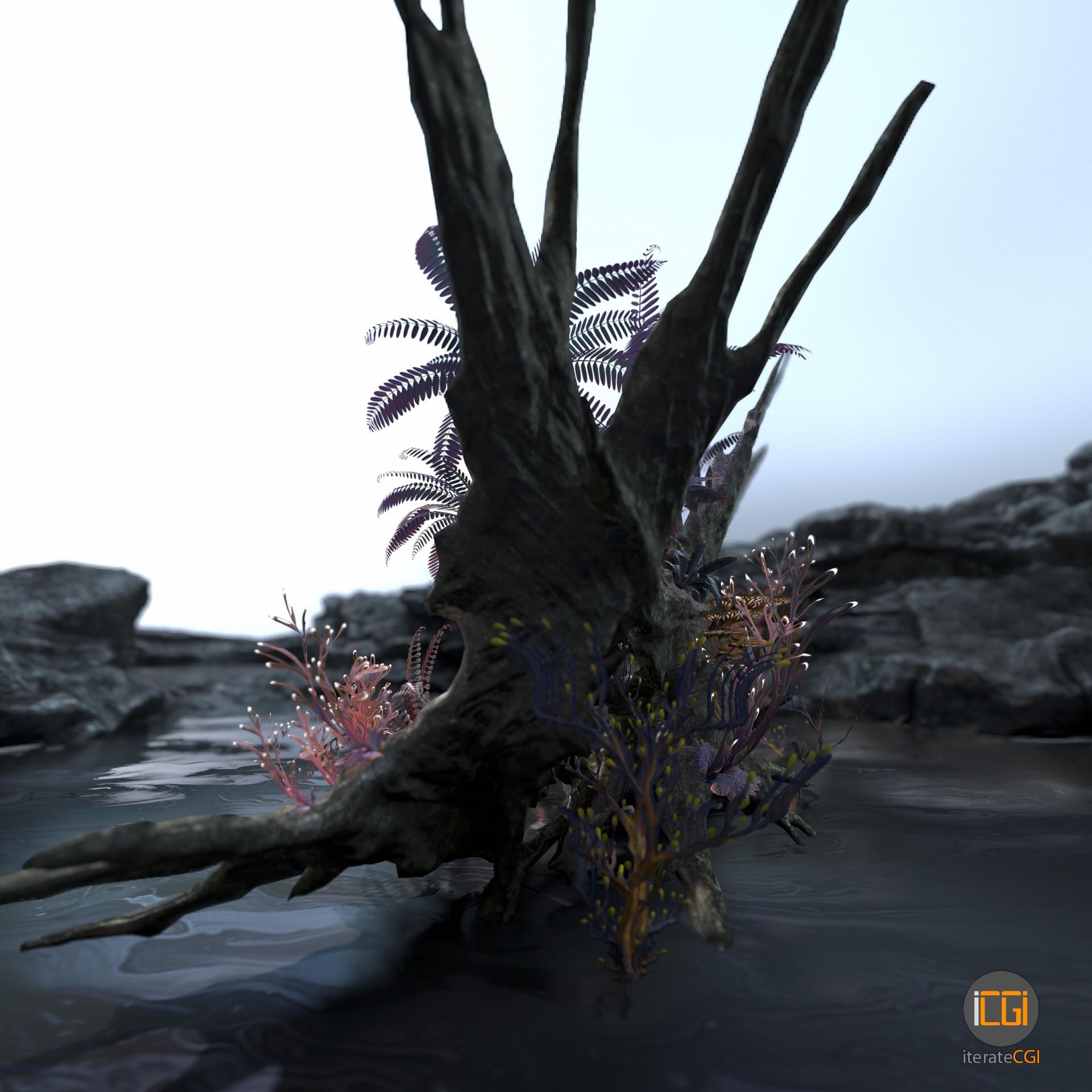 Johan de leenheer alien plant collection6