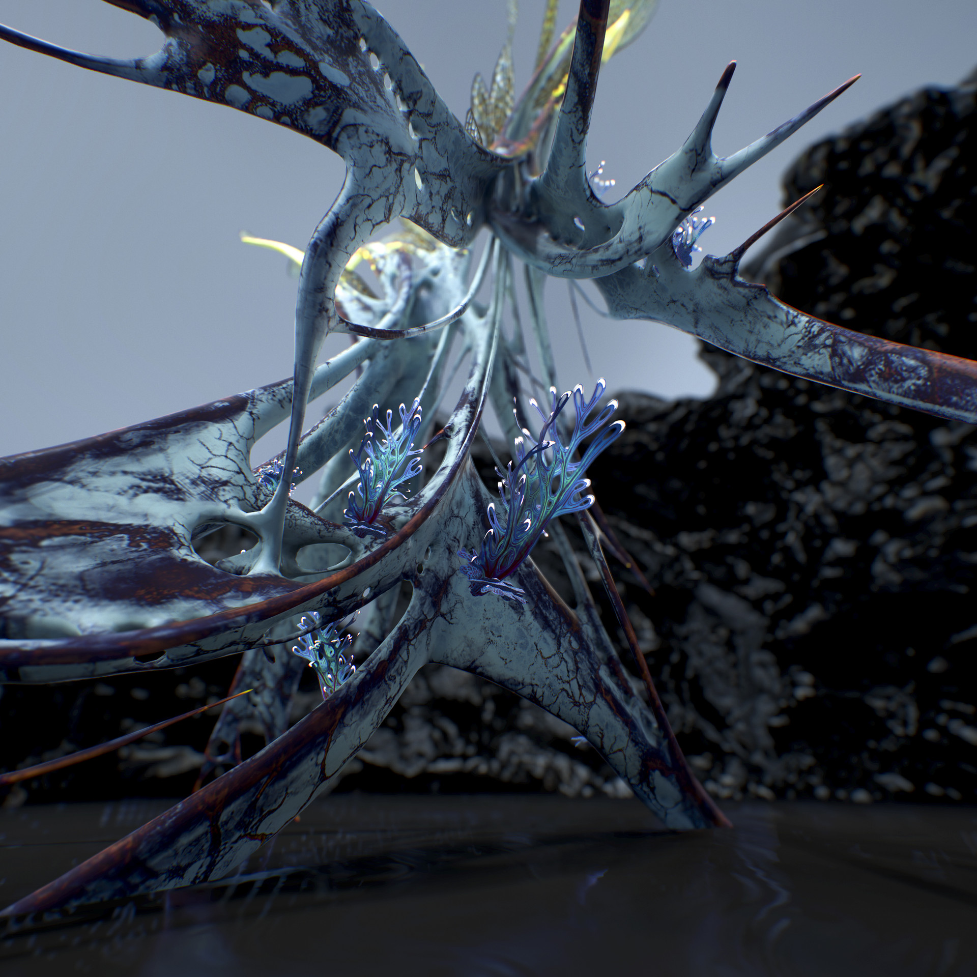 Johan de leenheer alien fern misota spletinus16