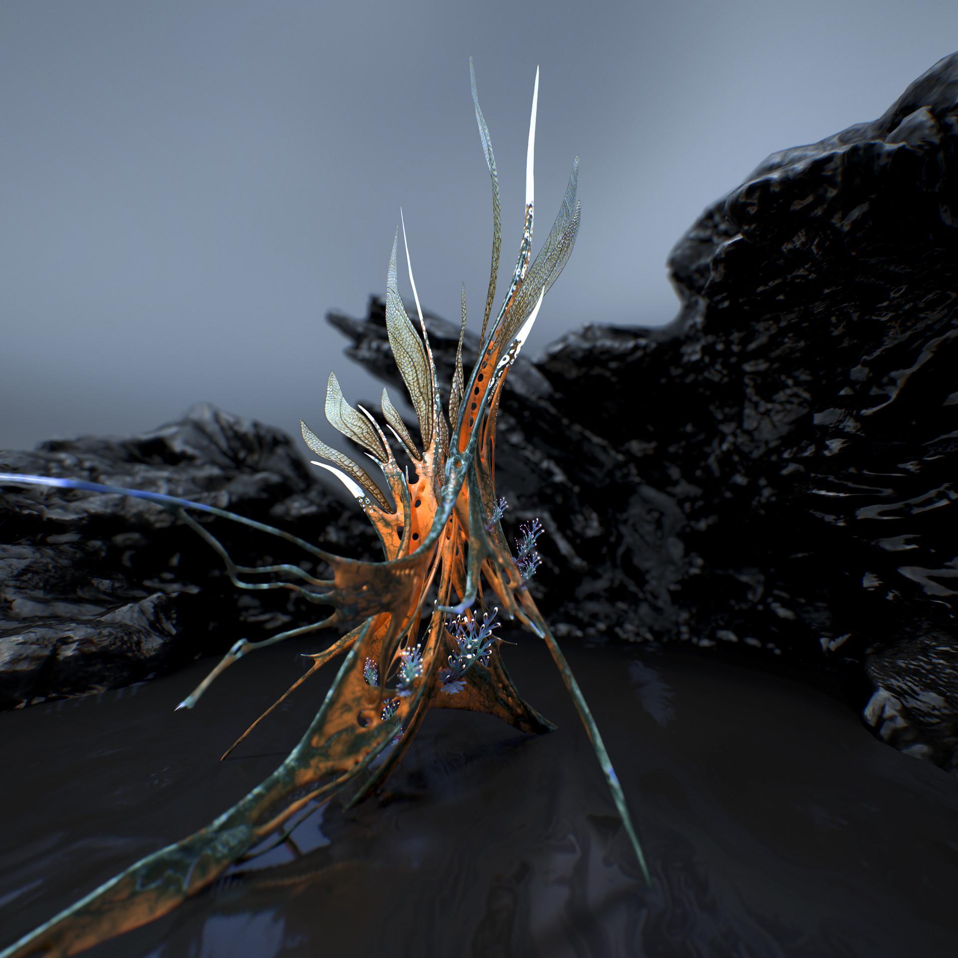 Johan de leenheer alien fern misota spletinus25