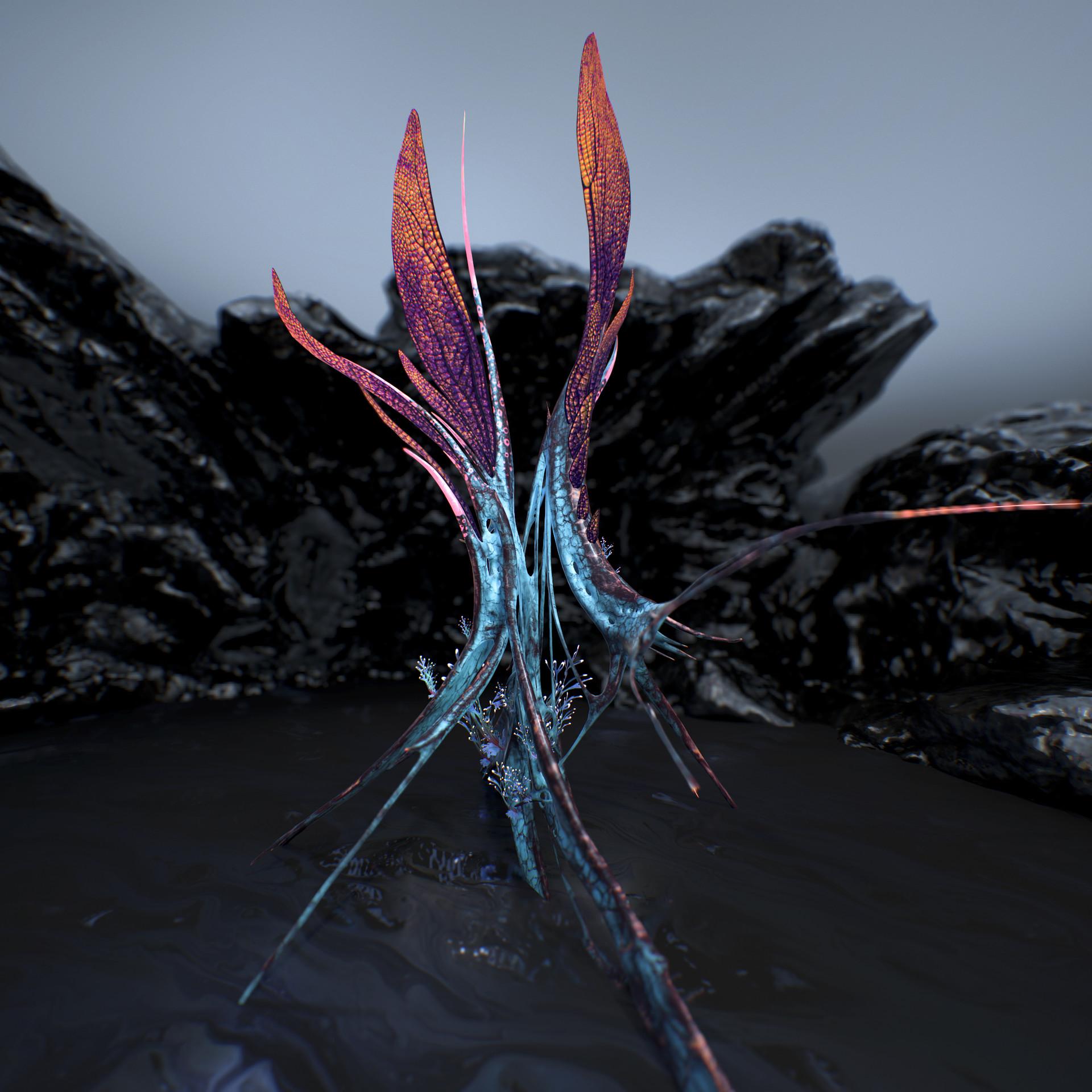 Johan de leenheer alien fern misota spletinus55