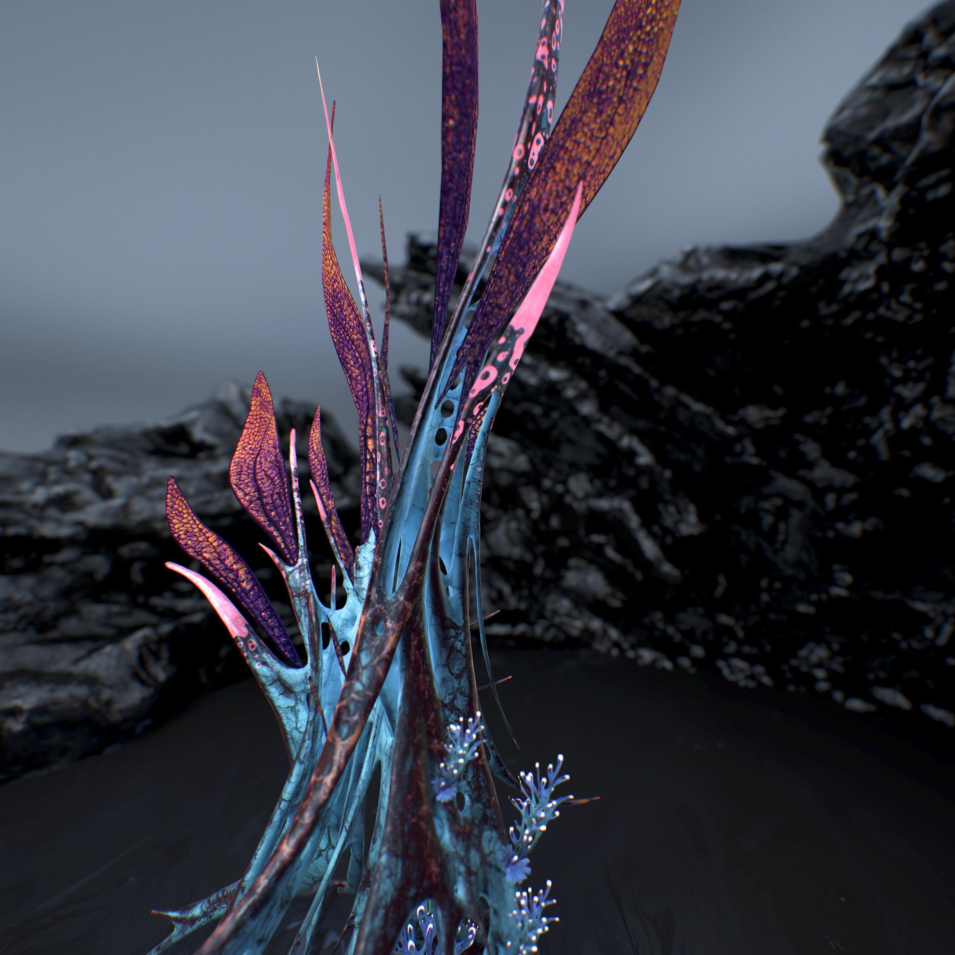 Johan de leenheer alien fern misota spletinus10