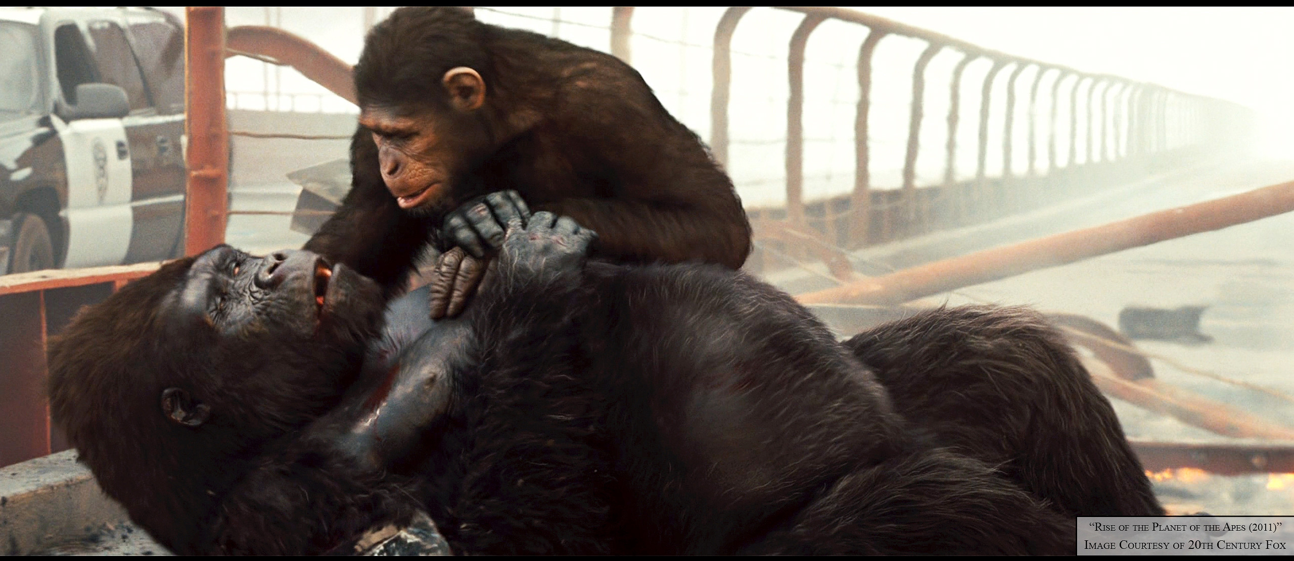 Artstation Rise Of The Planet Of The Apes Shannon Thomas