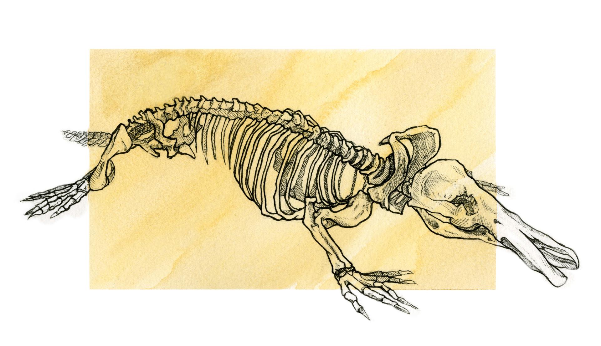 ArtStation - The Platypus - Naturalist Illustration , Luca Lonardi