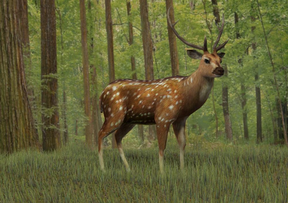 Keishu nakao deer