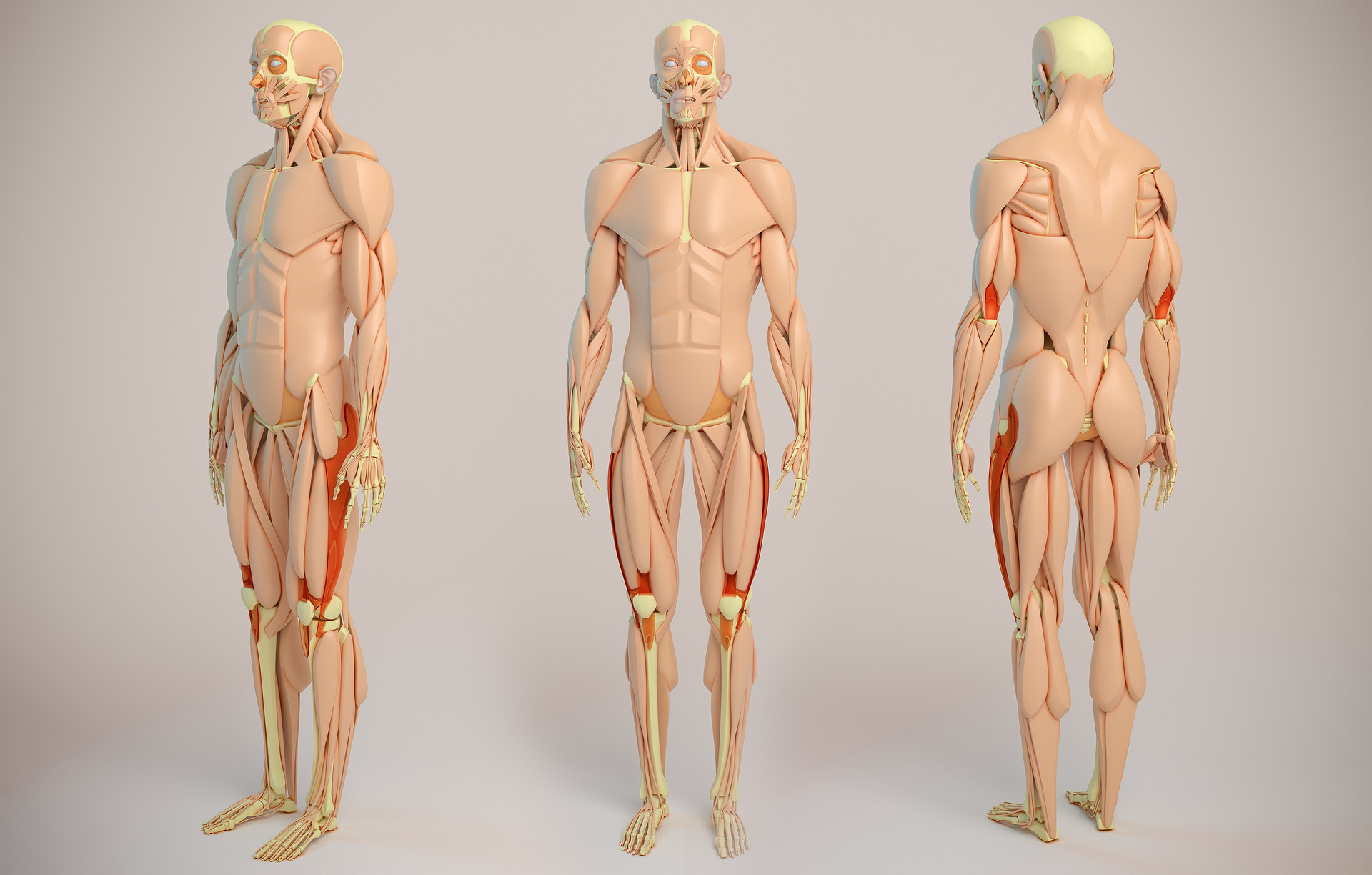Aleksandrs k male anatomy jpg halfsize