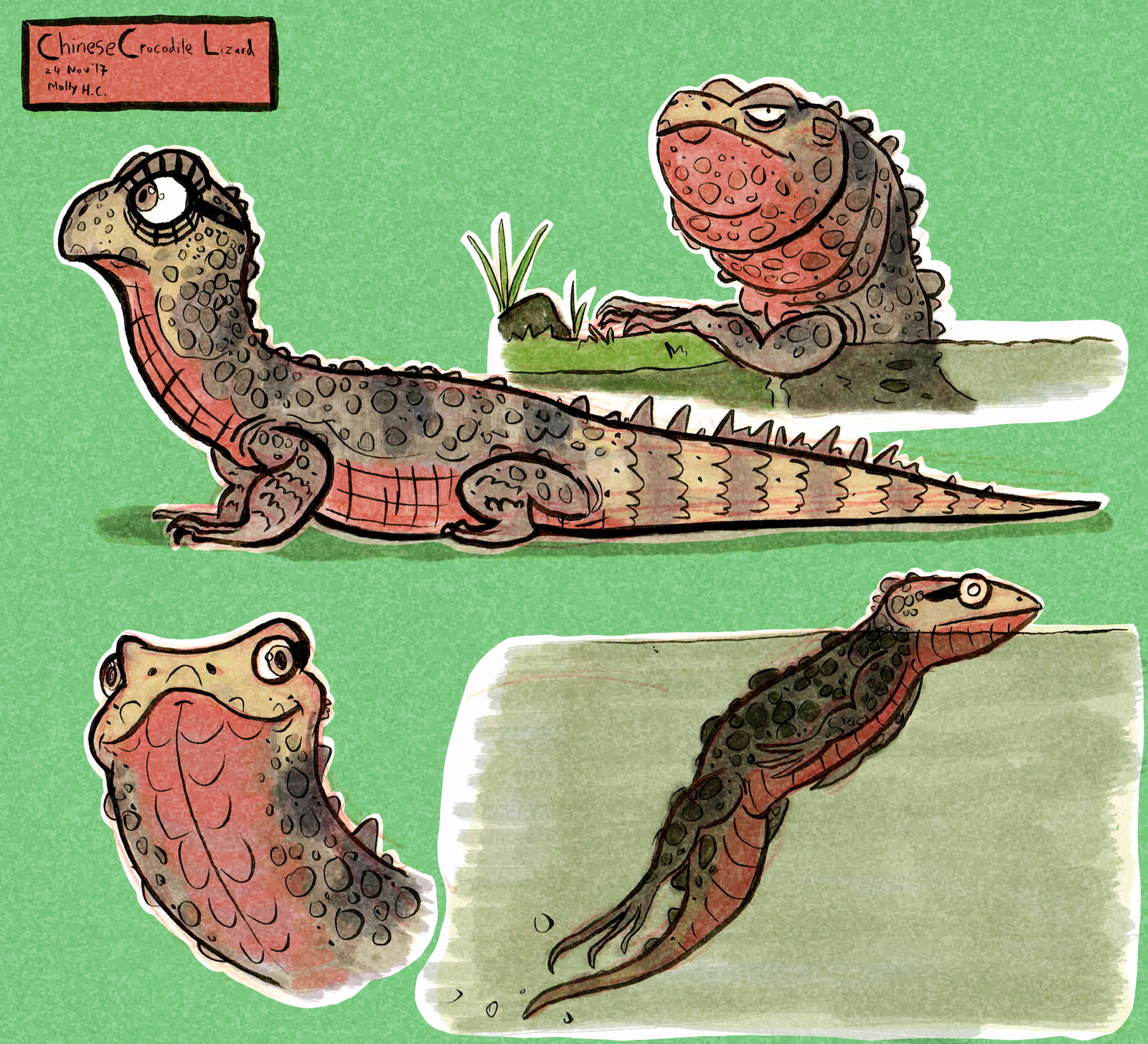 Chinese Crocodile Lizard Character Concepts