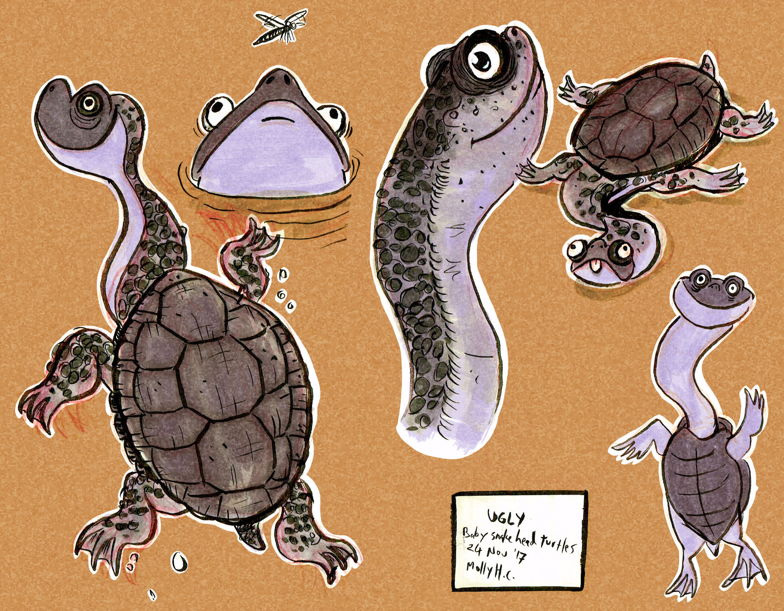 Snake Neck Turtle Character Concepts