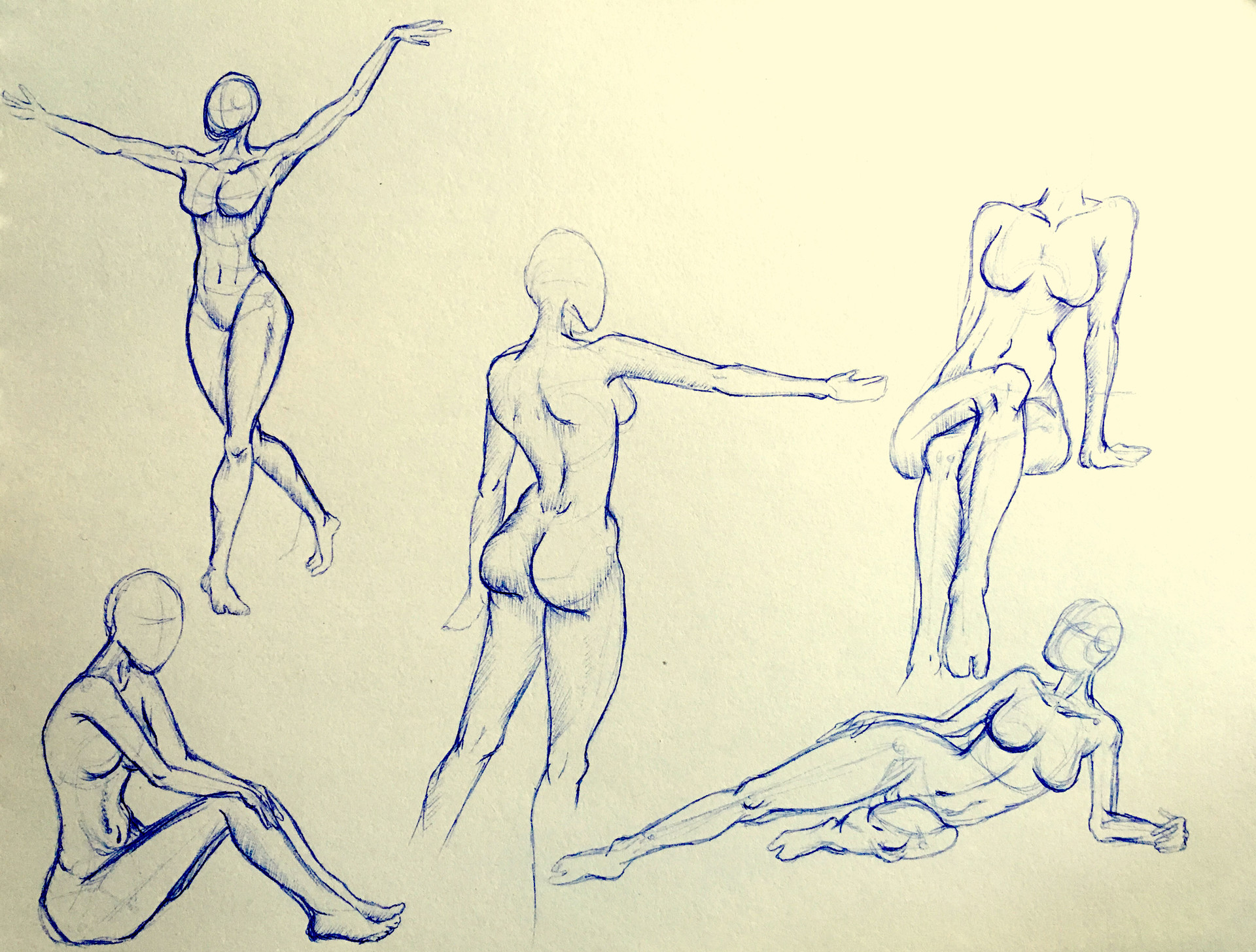 Art Body Anatomy