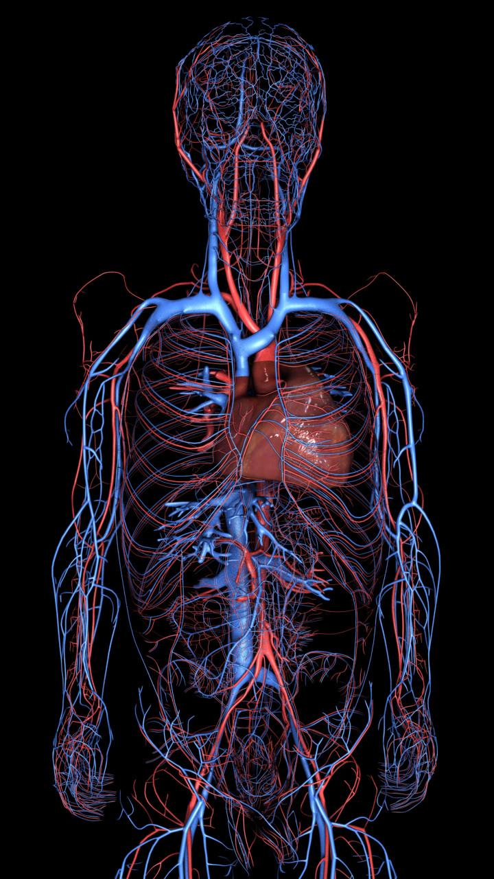 Ken calvert cardiovascular upper