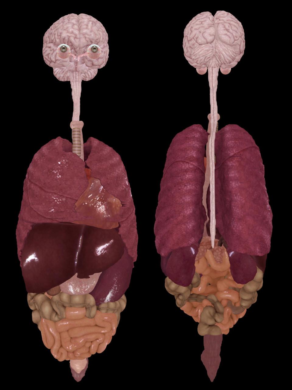 Ken calvert vk organs