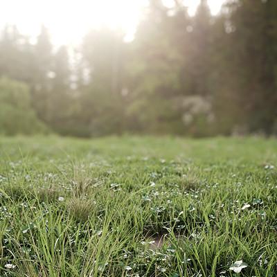 Ivan zabalza gonzalez senapaula portfolio polygetgrass