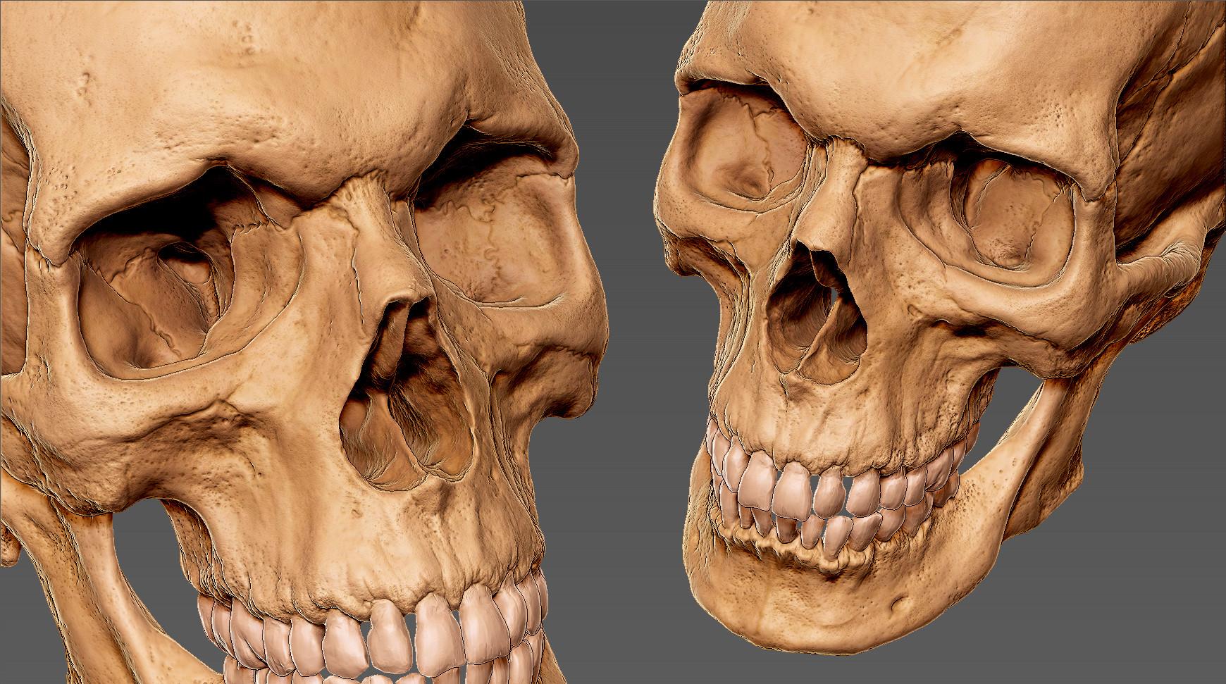 Andrey gritsuk skull 1