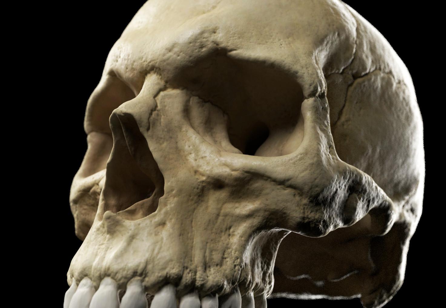 Andrey gritsuk skull detail er