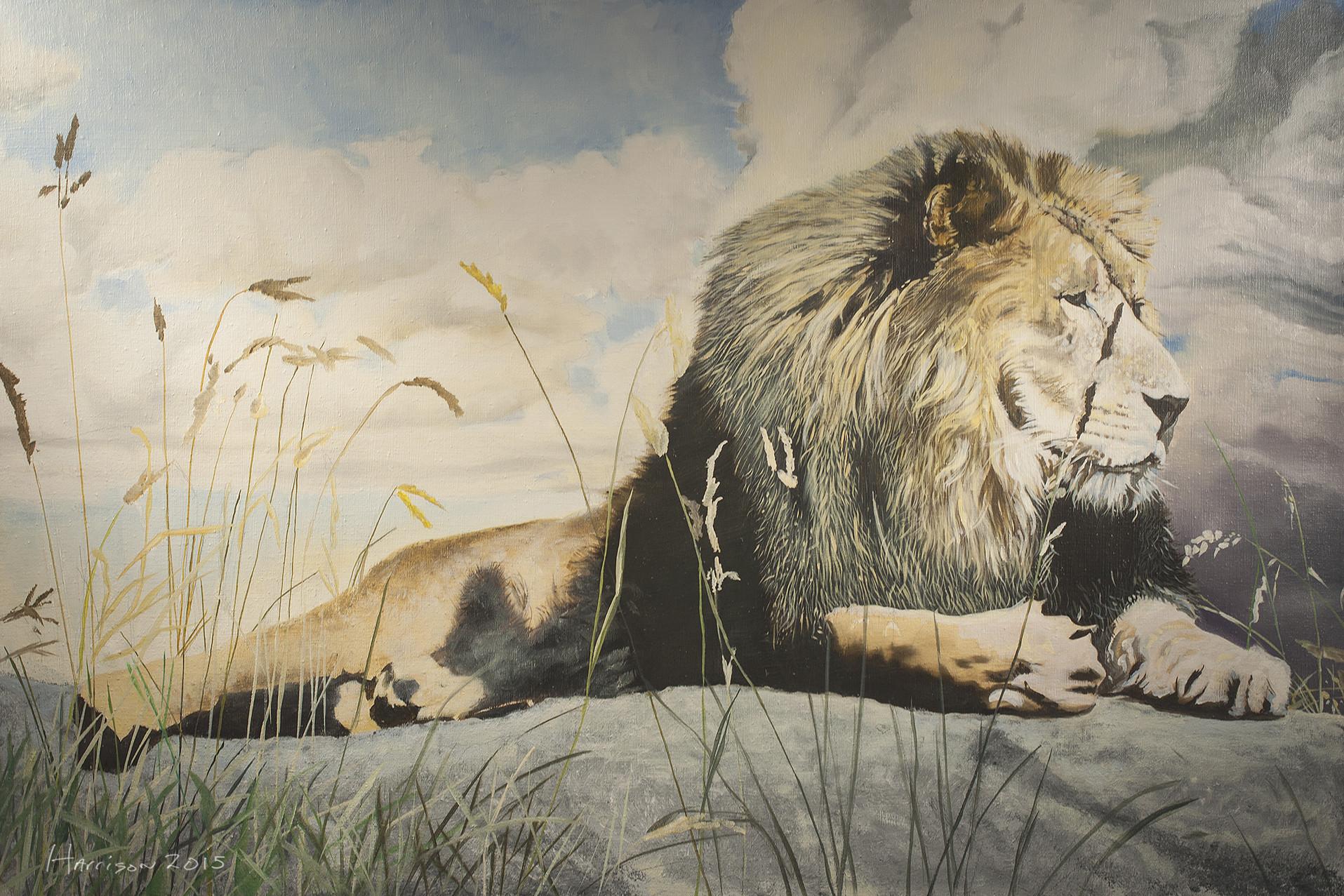 Ben harrison 03african lion 01