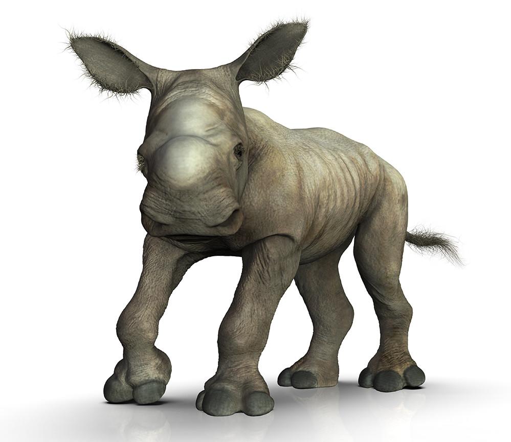 Mieke roth neushoorn haartjes2