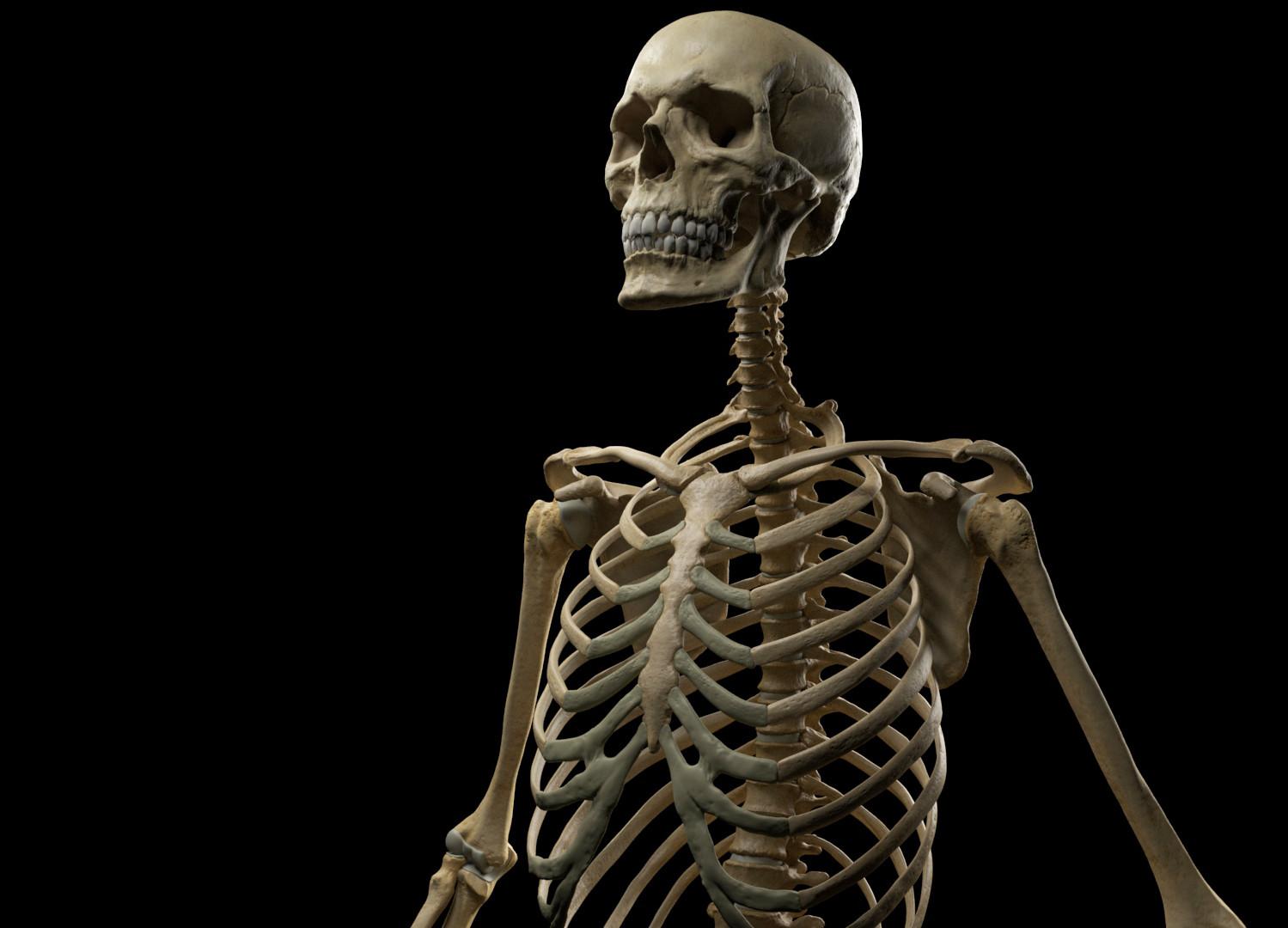 Andrey gritsuk skeleton 1 edit