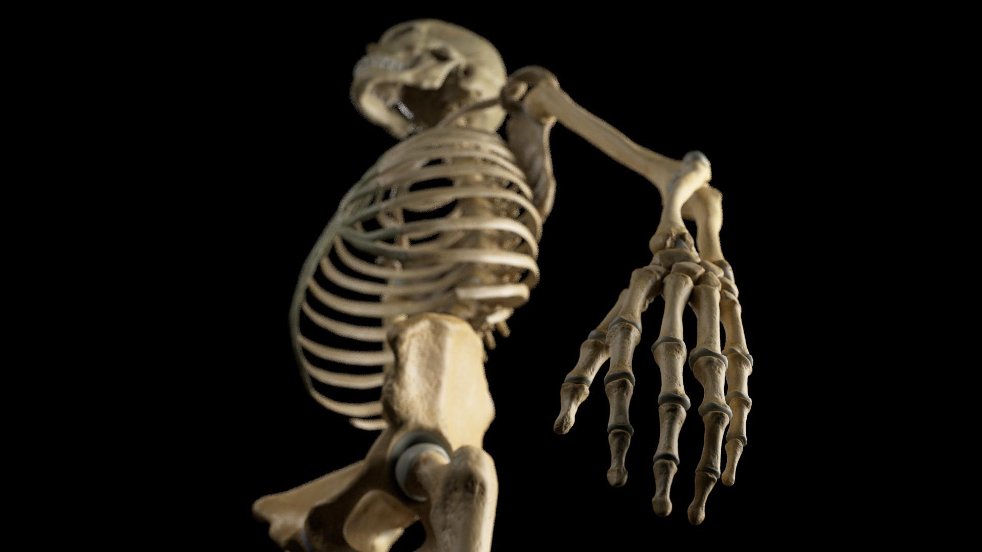 Andrey gritsuk skeleton 3 edit