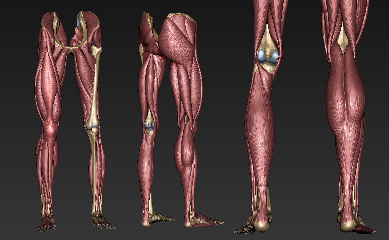 Andrey gritsuk leg muscles 2