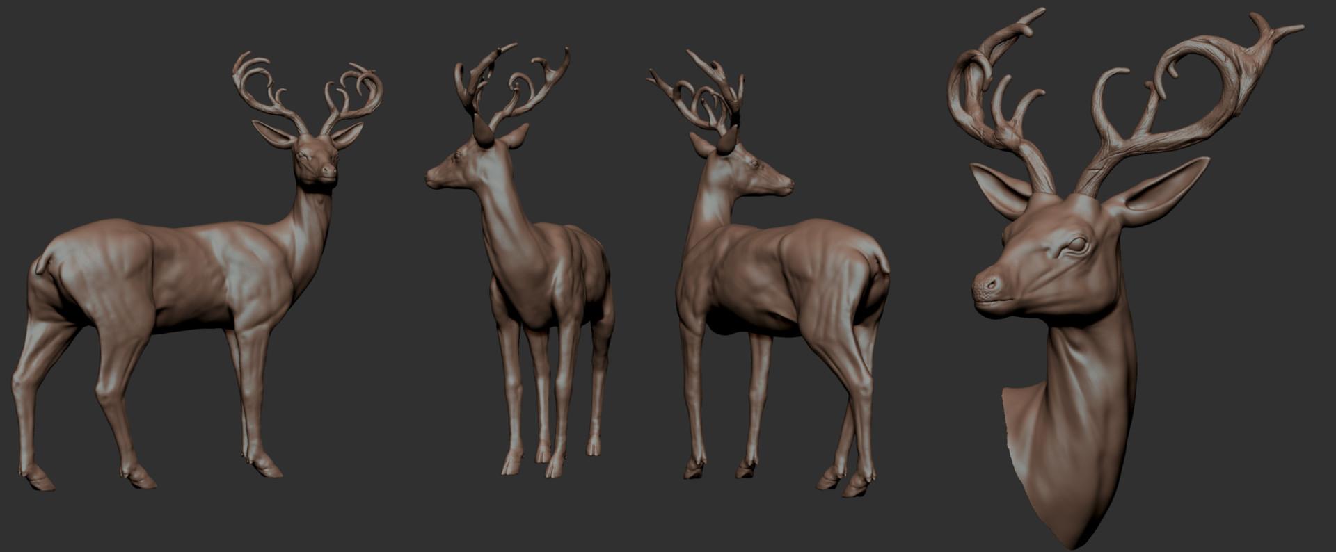 ArtStation - Deer - Anatomy Study, Lucas Gallo