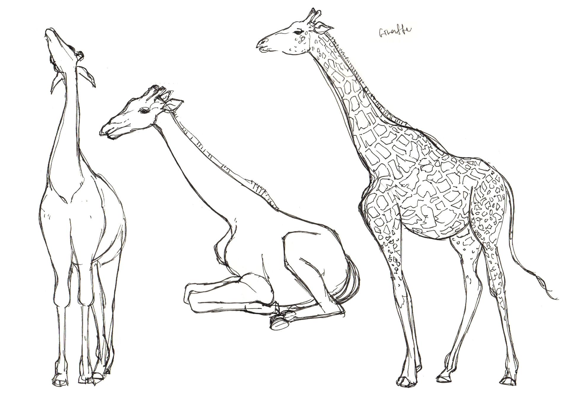 Lim Wai Yee Zoo Drawing