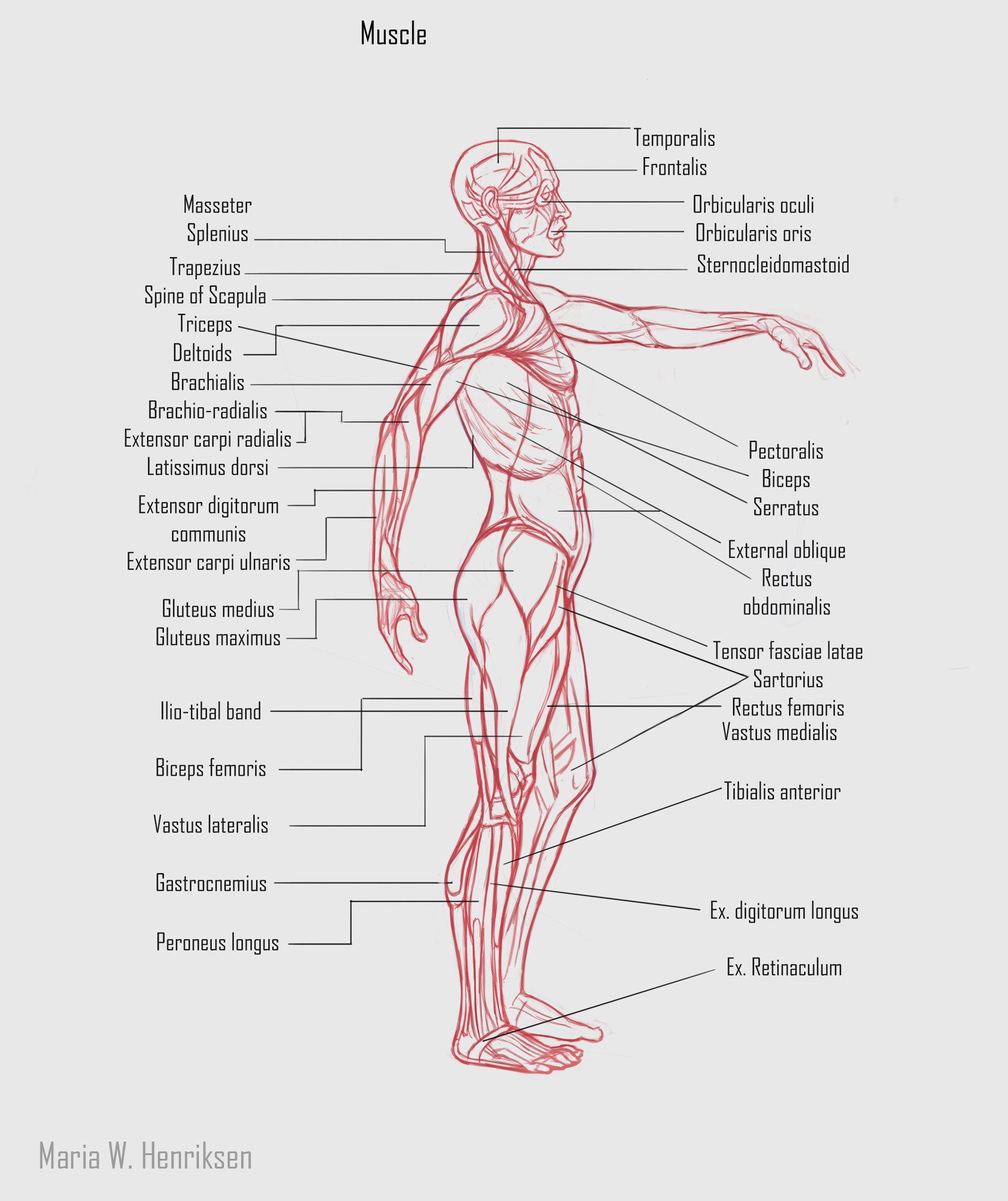 Maria W Henriksen Creature Anatomy Course Assignment 01 Human